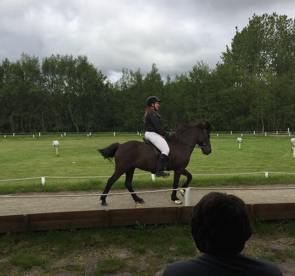 Icelandic horse-1
